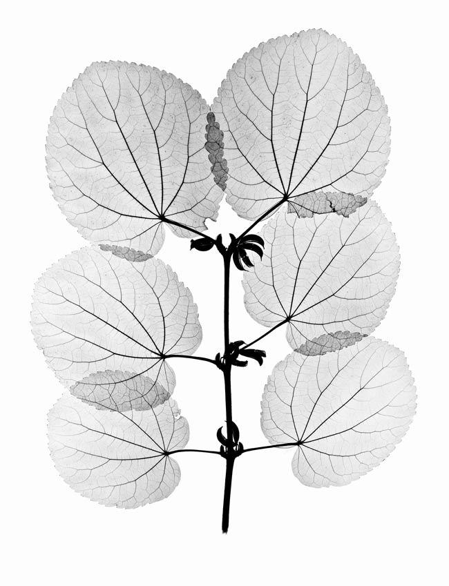 Plant X Ray
